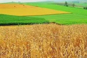 как взять в аренду землю сельхозназначения