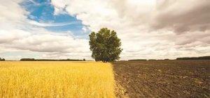 При переводе земли из одной категории пользования в другую можно столкнуться с некоторыми трудностями