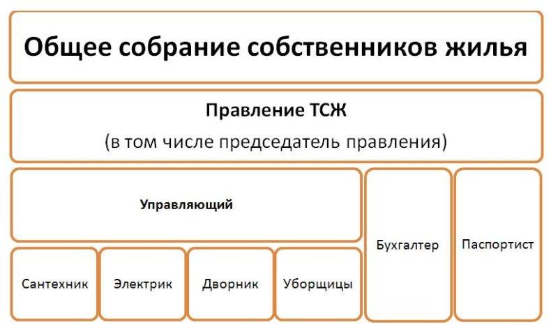Именно таким образом выглядит структура ТСЖ
