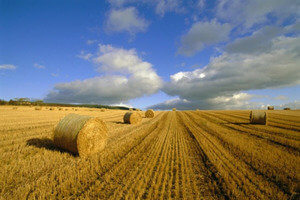 Назначение пахотных земель