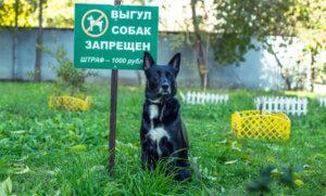 Место, где запрещен выгул собак